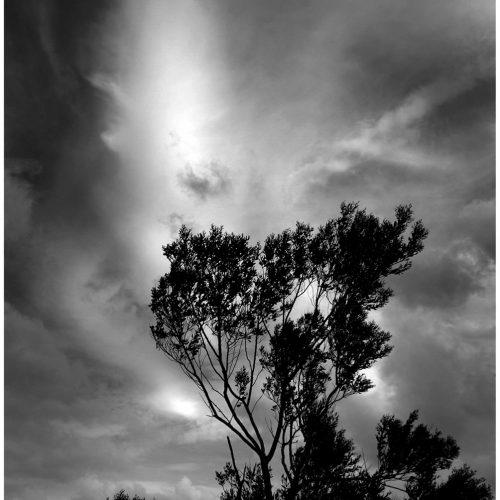 216 Moon Tree